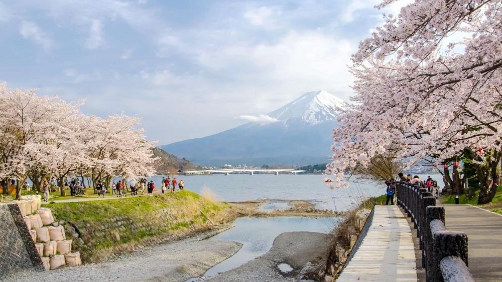 小众亲子旅游目的地,日本伊豆半岛