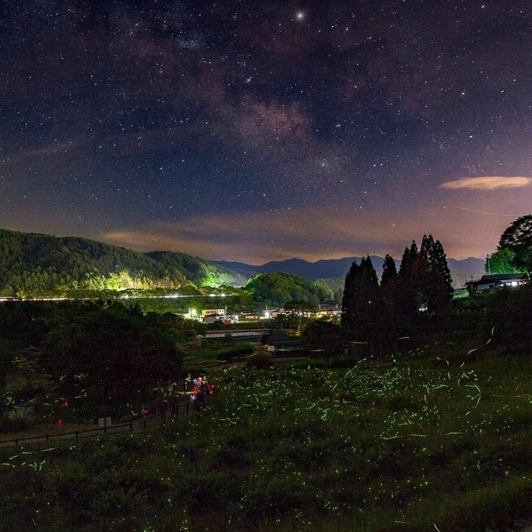 日本夏季哪里萤火虫好看?日本萤火虫胜地有哪些