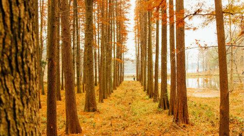 杭州周边赏秋好去处,大禹谷秋季景色如何?
