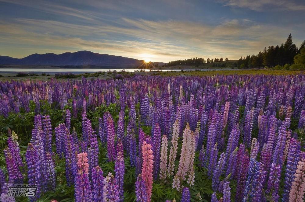 新西兰旅游费用多少?秋天去新西兰哪里赏鲁冰