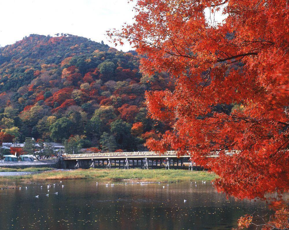 日本红叶季来临,去京都岚山赏枫最佳欣赏时间出炉