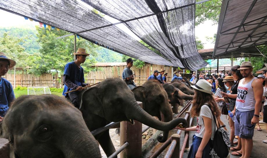 清迈旅游大象营