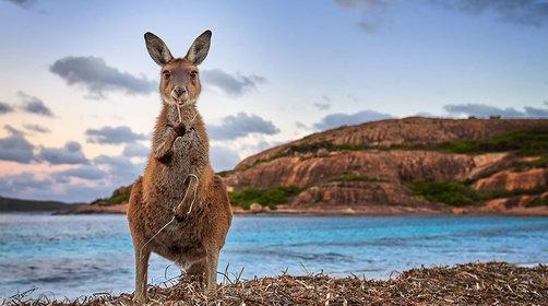 去澳洲旅游多少钱_澳洲自由行包车费用_澳洲旅游线路推荐