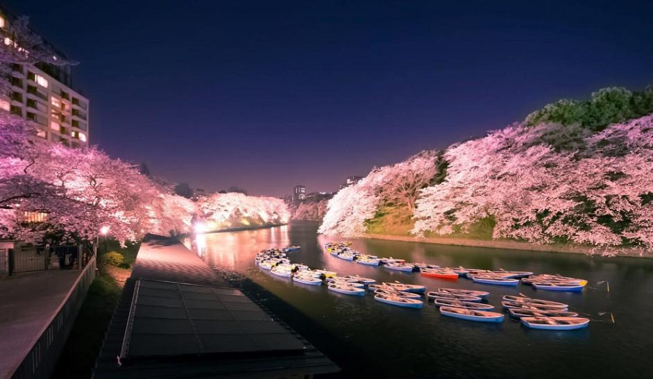 北海道花海什么时候去合适_北海道花季赏樱花攻